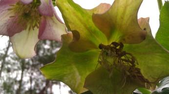 IMAG2364 flower