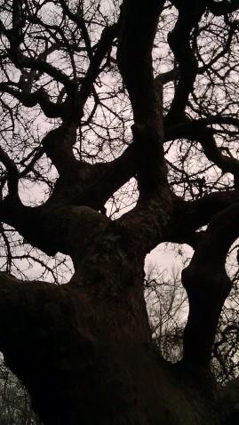IMAG2466 arboretum