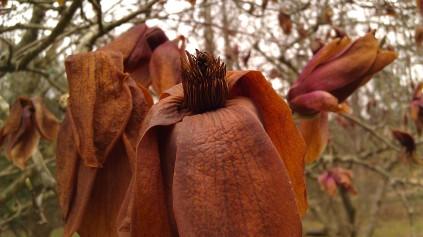 IMAG2502 arboretum