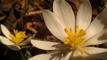 IMAG3353 flower