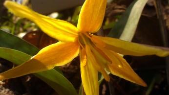 IMAG3371 flower