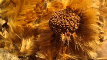 IMAG3374 seed