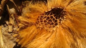 IMAG3378 seed