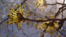 IMAG3385 cherry