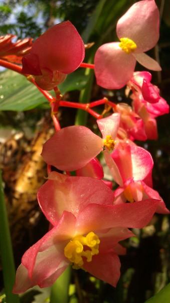 IMAG4125 flower