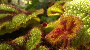 IMAG4144 leaf