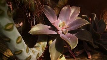 IMAG4152 succulent