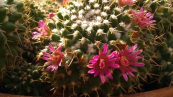 IMAG4160 cactus
