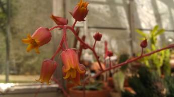 IMAG4163 flower