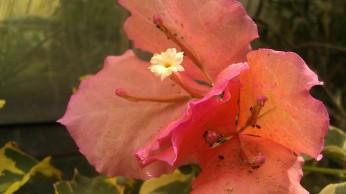 IMAG4297 flower