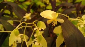 IMAG4330 flower