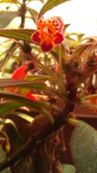 IMAG4336 flower