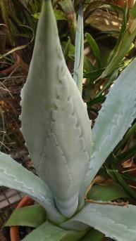 IMAG4352 leaf