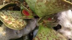 IMAG4355 plant
