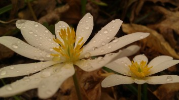 IMAG4739 flower