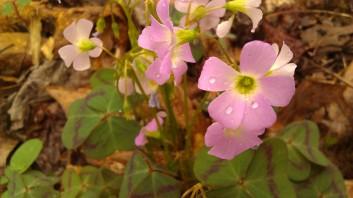 IMAG4742 flower