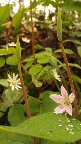 IMAG4764 flower