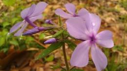 IMAG4815 flower