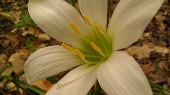 IMAG4836 flower
