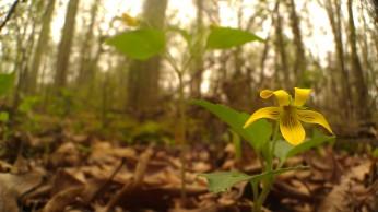 IMAG4850 flower
