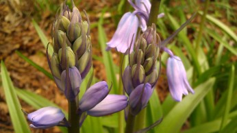 IMAG4888 flower