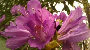 IMAG4898 flower