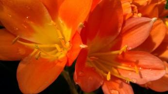 Tanya Mikulas, Arboretum 2012 IMAG5340