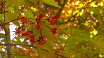 Tanya Mikulas, Arboretum 2012 IMAG5561