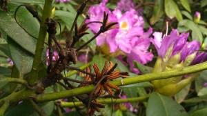 Tanya Mikulas, Arboretum 2012 IMAG5600