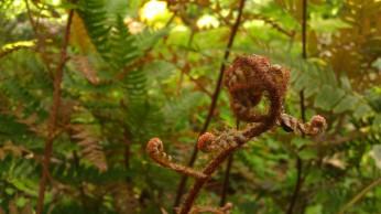 Tanya Mikulas, Arboretum 2012 IMAG5606