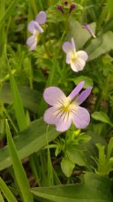 IMAG0135 violet