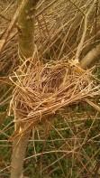 IMAG0357 nest