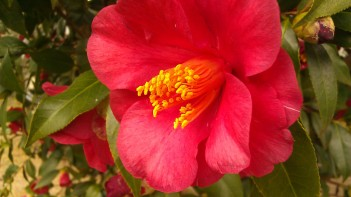 IMAG0364 flower