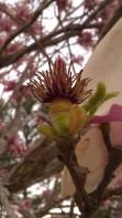 IMAG0479 flower