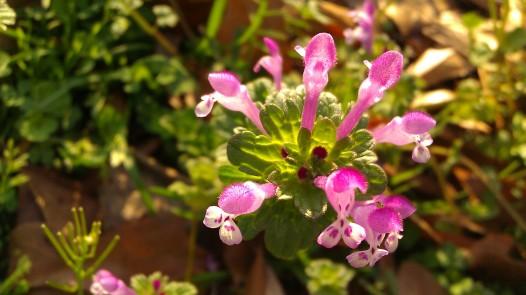 IMAG0492 flower