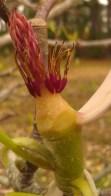 IMAG0595 flower