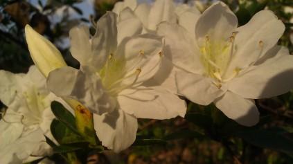 IMAG0860 flower
