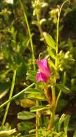 IMAG0876 flower