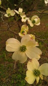 IMAG1042 flower