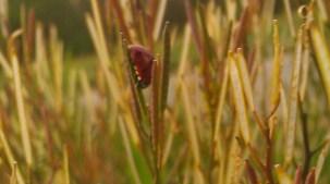 IMAG1045 ladybug