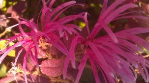 IMAG1194 flower