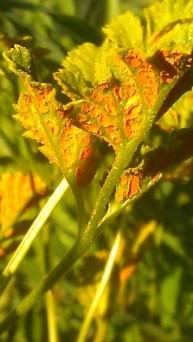 IMAG1202 orange