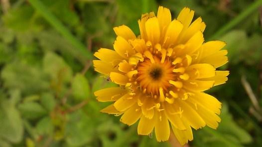 IMAG1269 flower