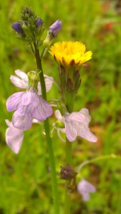 IMAG1510 flowers