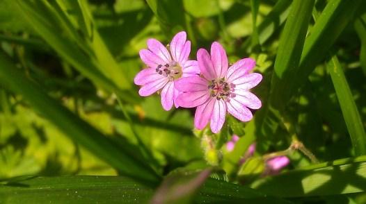 IMAG1755 flowers
