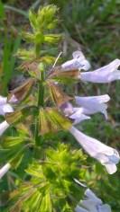 IMAG1762 flower