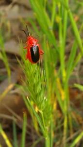 IMAG1908 bug