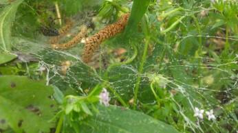 IMAG1993 spider