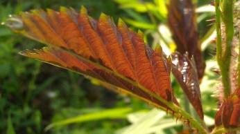 IMAG1997 leaf