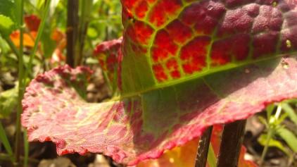 IMAG2106 leaf